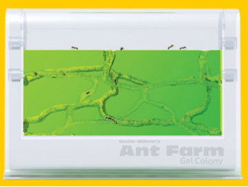 Ant Farm Gel Colony